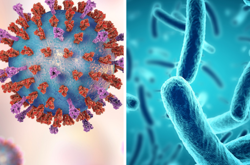 Virus vs Bacteria: What's the Difference?